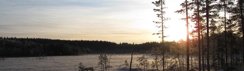 skogomark